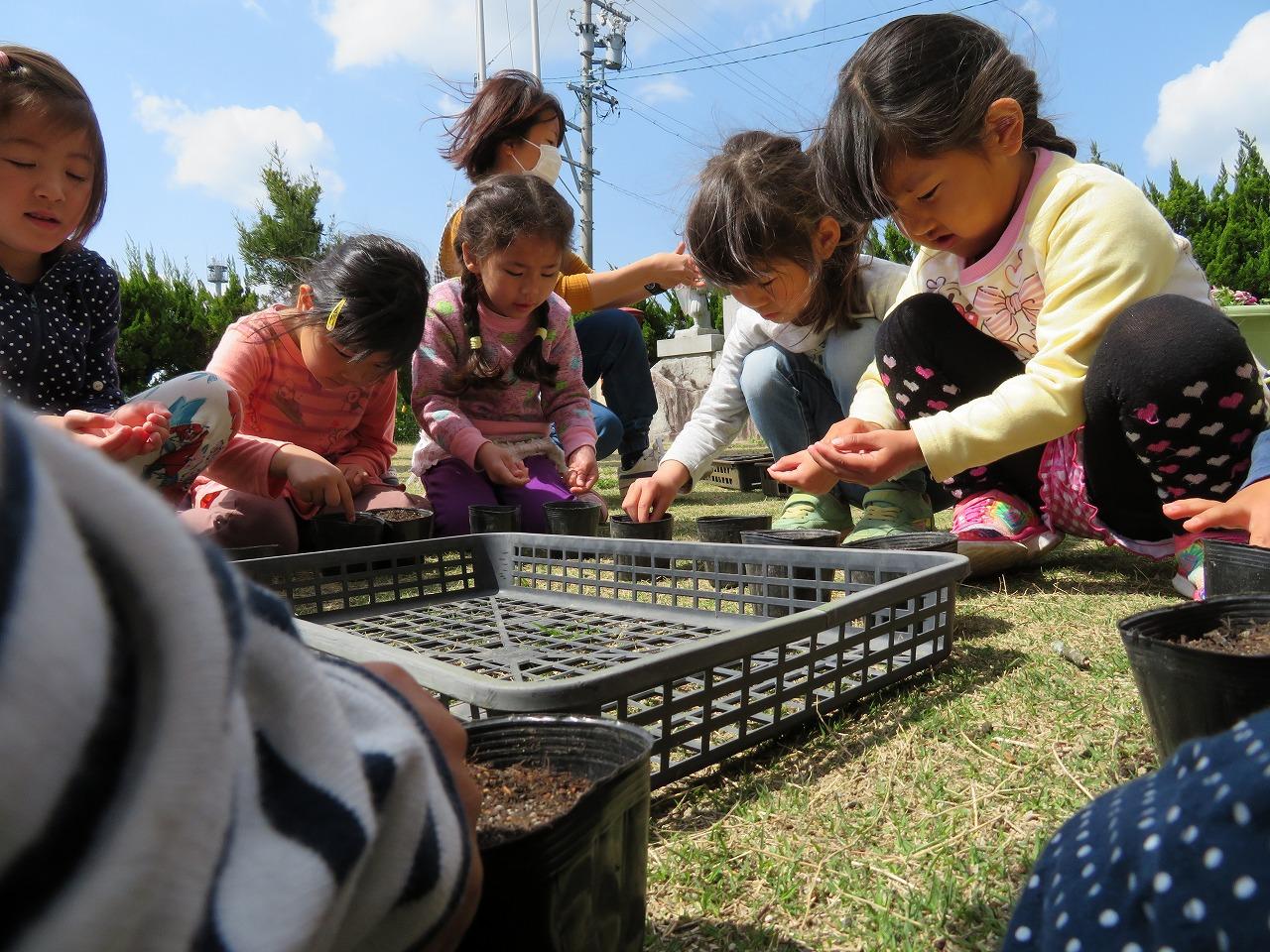ポップコーンとシソの種まき。 苗が育ってきたら、畑に植え替えをします。 ポップコーンを作るの楽しみ♪シソジュースを作るの楽しみ♪